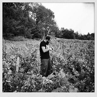 agriculture-vincent